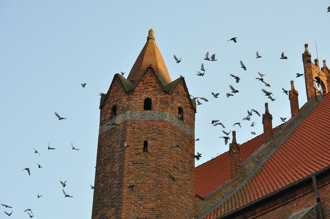 ochrona przed ptakami np gołębiami